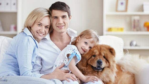 Wills & Trusts dog-young-family Direct Wills Winsford